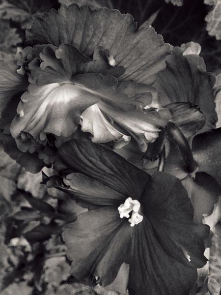 Olea 2012 © Tyler Boley