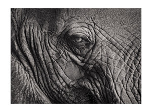 Elephant 2 ©Tyler Boley