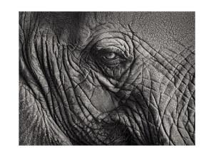 Elephant 2 © Tyler Boley