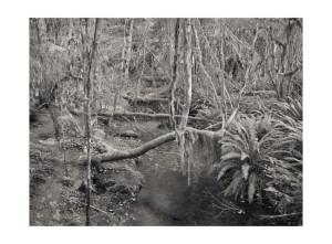 Hoh Rainforest WA © Tyler Boley