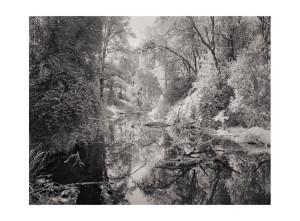 Ridgefield WA 3 ©Tyler Boley