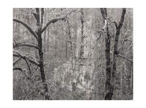 Silver Falls OR © Tyler Boley