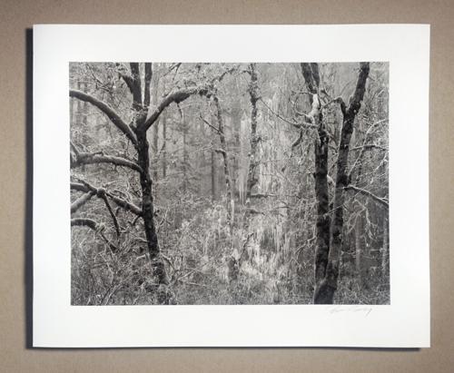 Silver Falls, OR © Tyler Boley